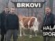 BRKOVI - Hala sportova, Tiket Klub